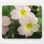 Pink Wild Primrose Plant Mousepads