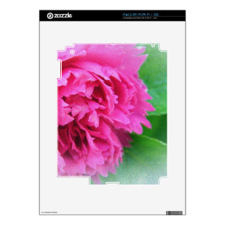 pink wild rose flower decal for the iPad 2