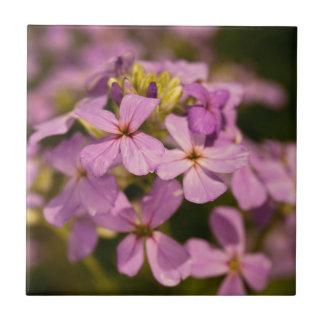 Pink Wildflower Ceramic Tile