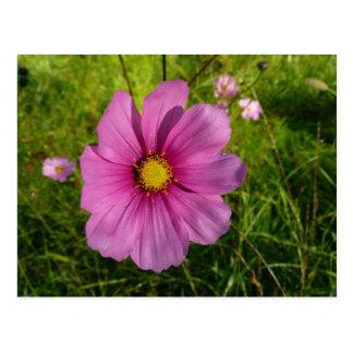 Pink Wildflower Postcard
