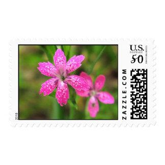 Pink Wildflower ~ stamp