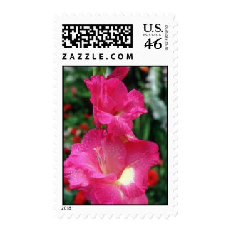 Pink Wind Song Gladiolus flowers Postage Stamps