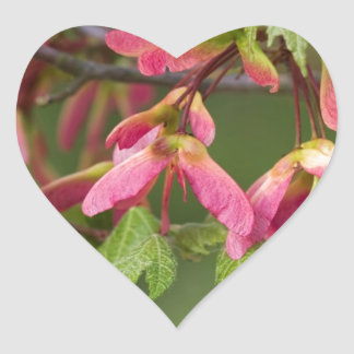 Pink Winged Sycamore Seeds - Acer pseudoplatanus Heart Sticker