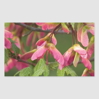 Pink Winged Sycamore Seeds - Acer pseudoplatanus Rectangular Sticker