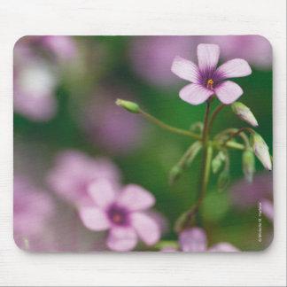 Pink Wood Sorrel Mousepad