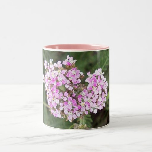 Pink Yarrow 1 Mug
