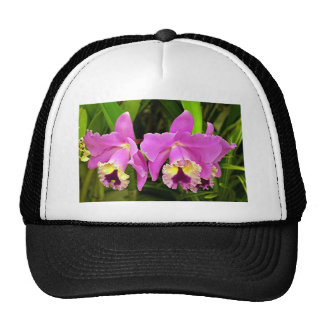 Pink & yellow Orchid flowers in bloom Trucker Hat
