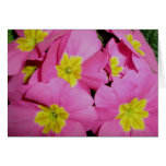 Pink Yellow Primrose Note Card