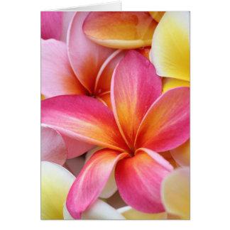 Pink Yellow Purple Plumeria Frangipani Flowers Card