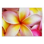 Pink Yellow Purple Plumeria Frangipani Flowers Cards