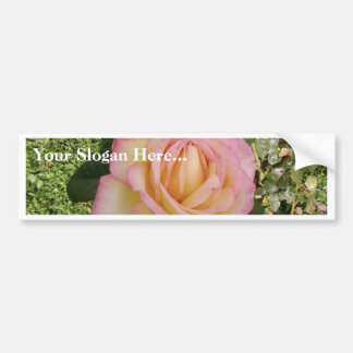 Pink Yellow Rose Macro Bumper Stickers