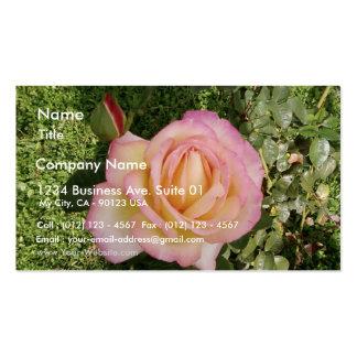 Pink Yellow Rose Macro Business Card
