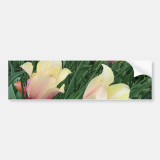 Pink & Yellow Tulips Bumper Stickers