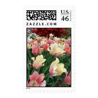 Pink & Yellow Tulips Postage