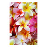 Pink Yellow  White Mixed Plumeria Flower Stationery Paper