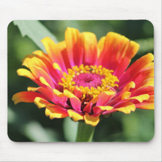 Pink & Yellow Zinnia Mouse Pad