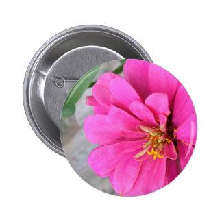 Pink Zinnia Pinback Buttons