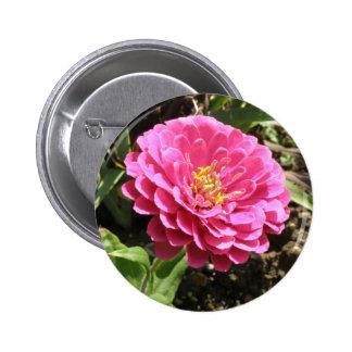Pink Zinnia Button