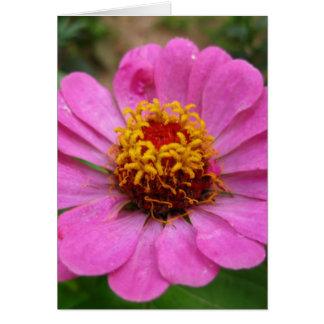 pink zinnia cards