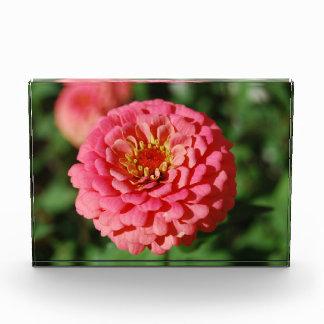 Pink Zinnia decorative acrylic block Award