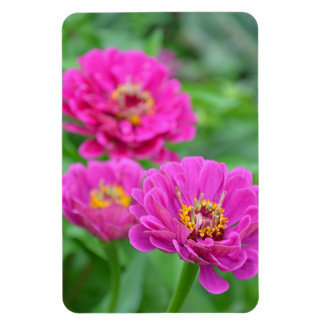 Pink zinnia floral magnet