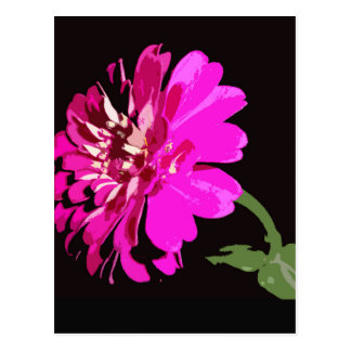 Pink Zinnia Floral Photography Design Postcard