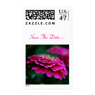 Pink Zinnia  Flower Postage