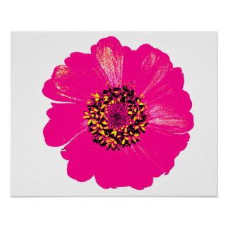 Pink Zinnia Flower Posters