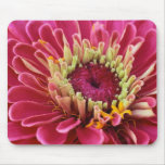 pink zinnia mouse pad