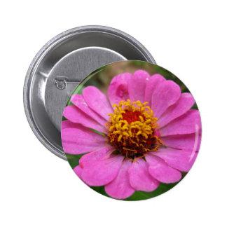 pink zinnia pinback button