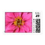 Pink Zinnia Stamps