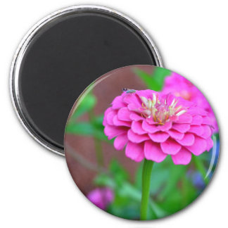 Pink Zinnia with a Bug Magnet