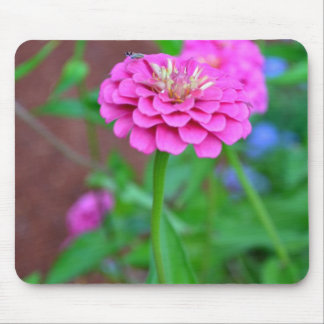 Pink Zinnia with a Bug Mouse Pad