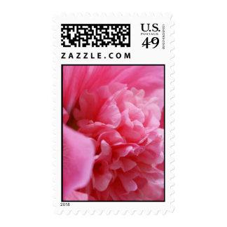 Pinkalicious Stamps