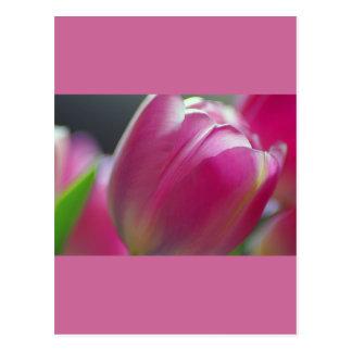 Pinkalicious, tulipanes, plantilla de la postal