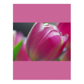 Pinkalicious, Tulips, Postcard Template Post Cards