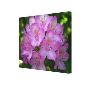 Pinkish purple Rhododendron Catawbiense Canvas Print
