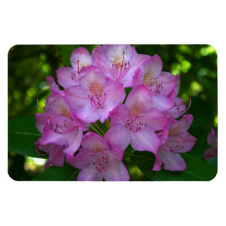 Pinkish purple Rhododendron Catawbiense Magnet