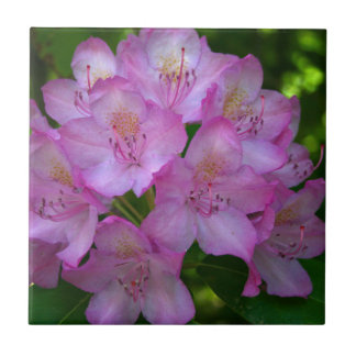 Pinkish purple Rhododendron Catawbiense Tile