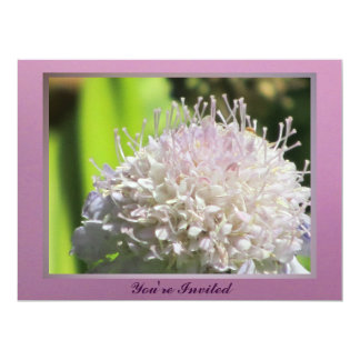 Pinkish White Wildflower Card