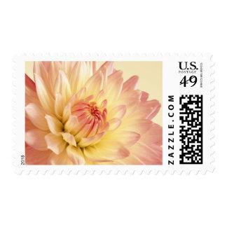 Pinkish-yellow Dahlia Postage