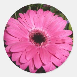 Pinkk Gerber Daisy Stickers