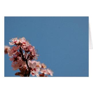 PinkOnBlue Greeting Card