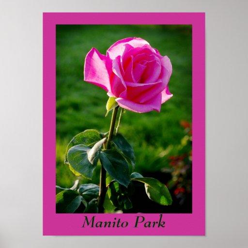 PinkRose, parque de Manito Impresiones