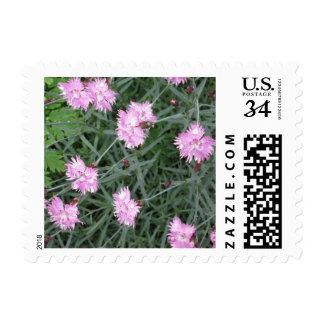 Pinks Flower Garden Postage Stamp