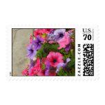 Pinks Stamp
