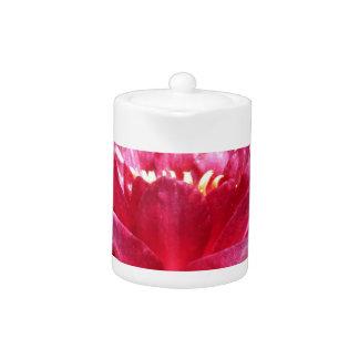pinkwaterlily