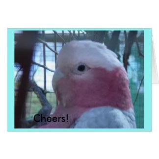 Pinky Card