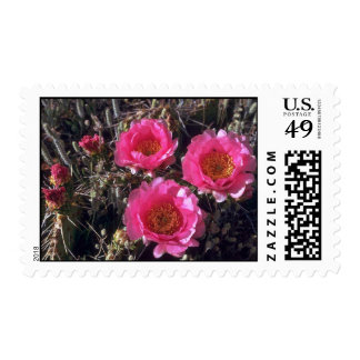 Pinky Flowers Stamps