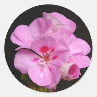 Pinky Geranium Classic Round Sticker